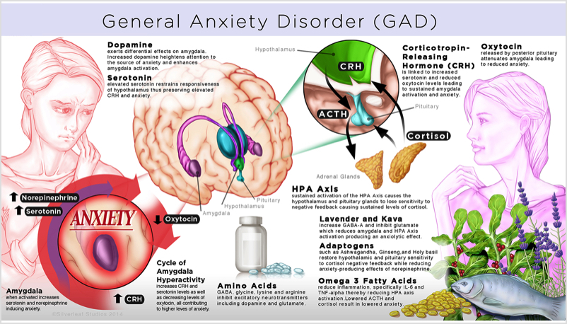 anxiety disorder and the brain essay Essay anxiety disorders anxiety is a feeling of tension associated with a sense of threat of danger when the source of the danger is not known in comparison, fear is a feeling of tension that is associated with a known source of danger.